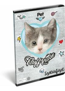 Füzet tűzött A/5 szótár 31-32 Pet Fluff Kitten