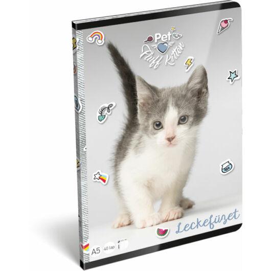 Leckefüzet Pet Fluff Kitten